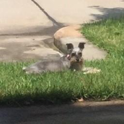 Miss T sunbathing