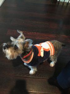 Fox Dog Sweater
